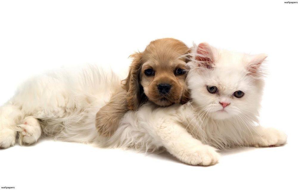 lambulanza-veterinaria-e-attiva-a-varese