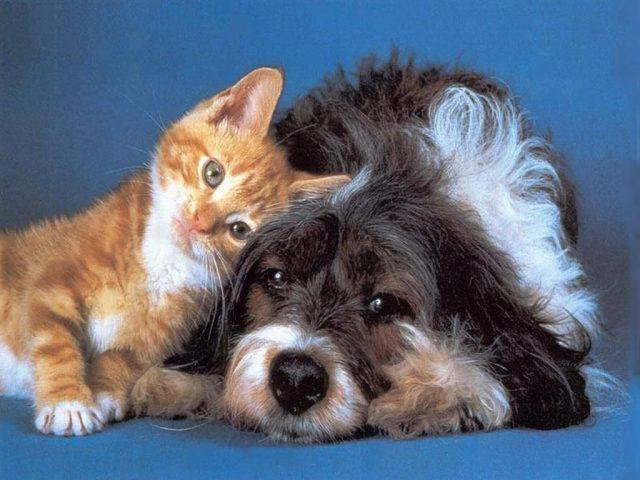 L'amore tra cane e gatto
