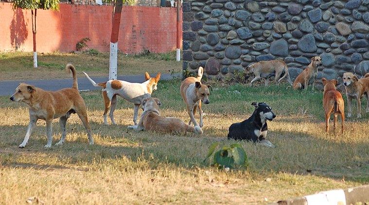 Leslie Robinson ha creato un rifugio per i cani abbandonati