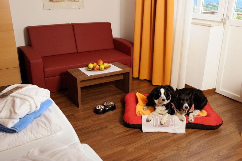 L'hotel che crede che i cani siano meglio dei padroni come ospiti