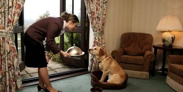 L'hotel che ha dichiarato che i cani sono meglio dei padroni
