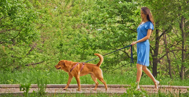 limportanza-della-passeggiata-per-il-cane