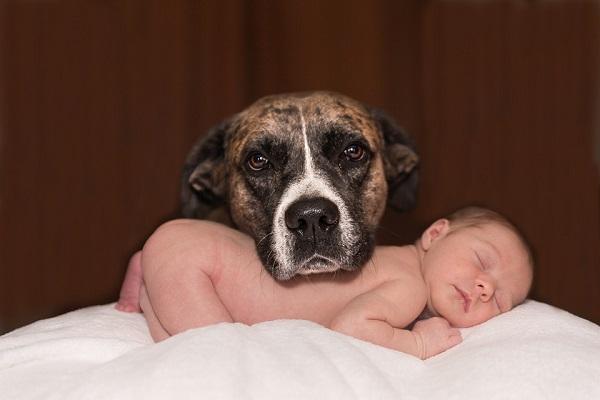 Avere un cane quando si hanno dei figli