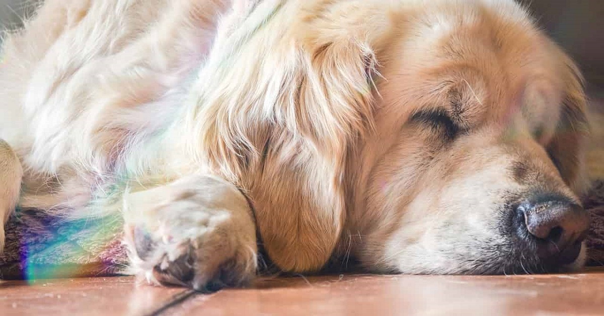 Modi in cui i cani chiedono aiuto: ecco i cinque più frequenti