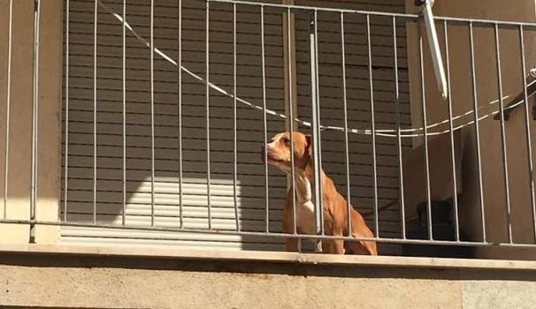 Cani chiusi in balcone: a Verona fioccano le prime multe