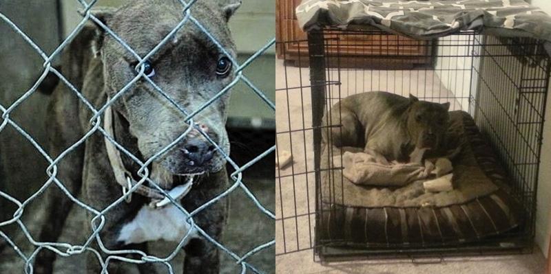 pj-ex-tossicodipendente-che-si-e-salvato-grazie-ad-un-cane