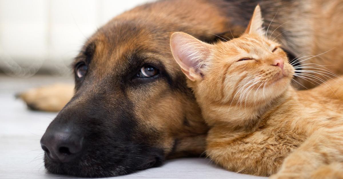 proposta-di-legge-in-francia-i-cani-e-i-gatti-hanno-i-diritti-degli-esseri-viventi