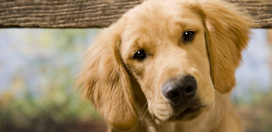 Smetti trattare il tuo cane come se fosse un bambino