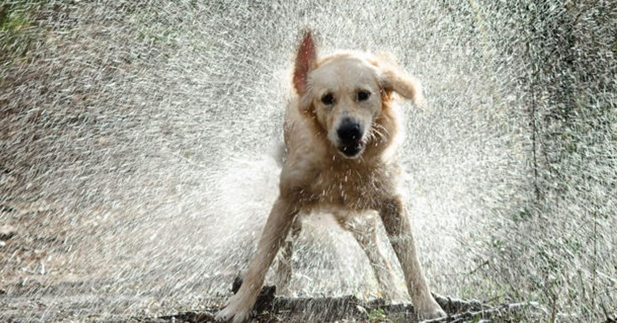 tutti-i-falsi-miti-da-sfatare-relativi-al-comportamento-dei-cani