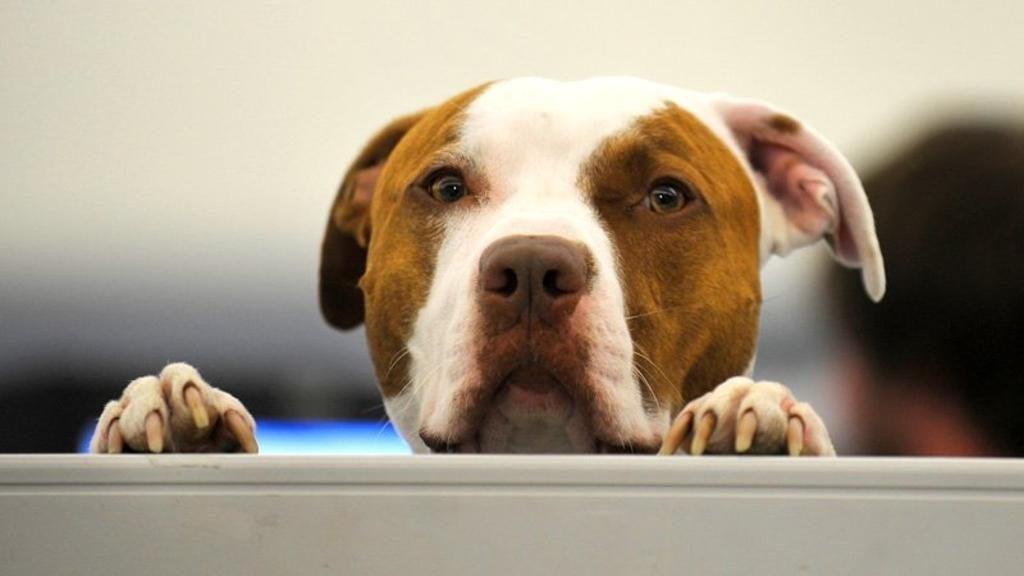 Un cane che osserva