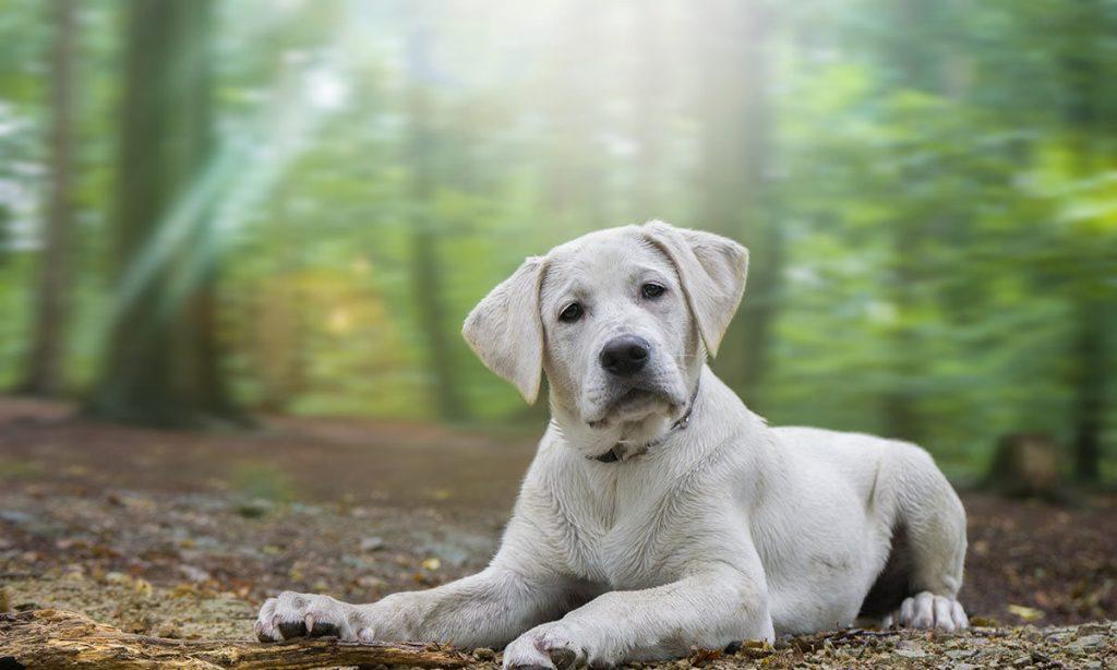 Un cane nel bosco