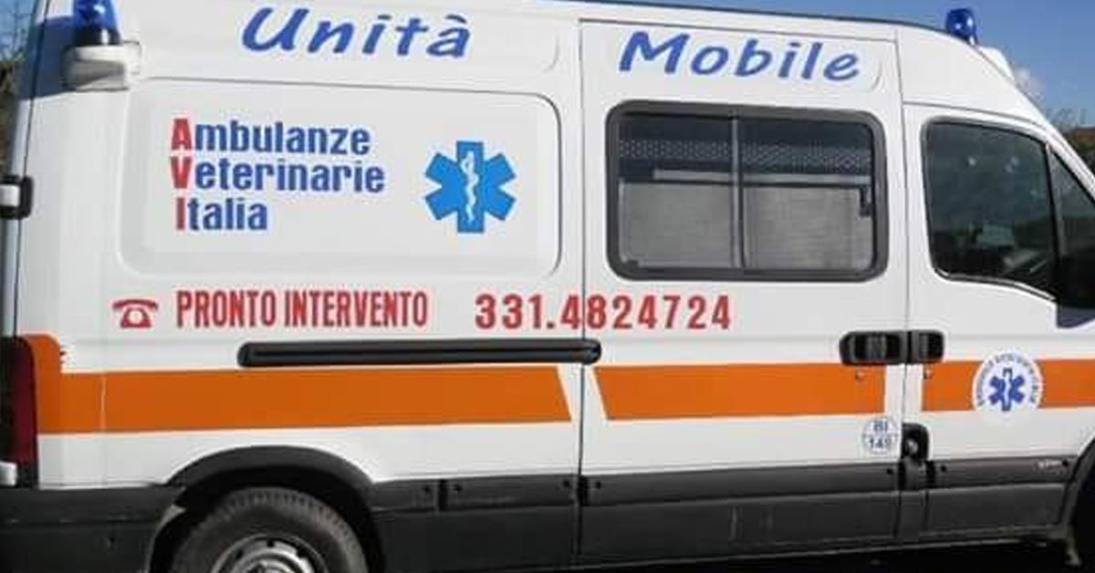 varese-attivato-il-servizio-per-lambulanza-veterinaria-24-ore-su-24