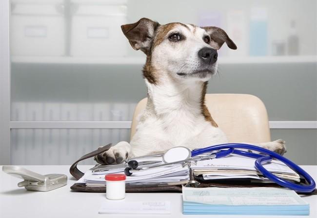 varese-attivo-il-servizio-per-lambulanza-veterinaria
