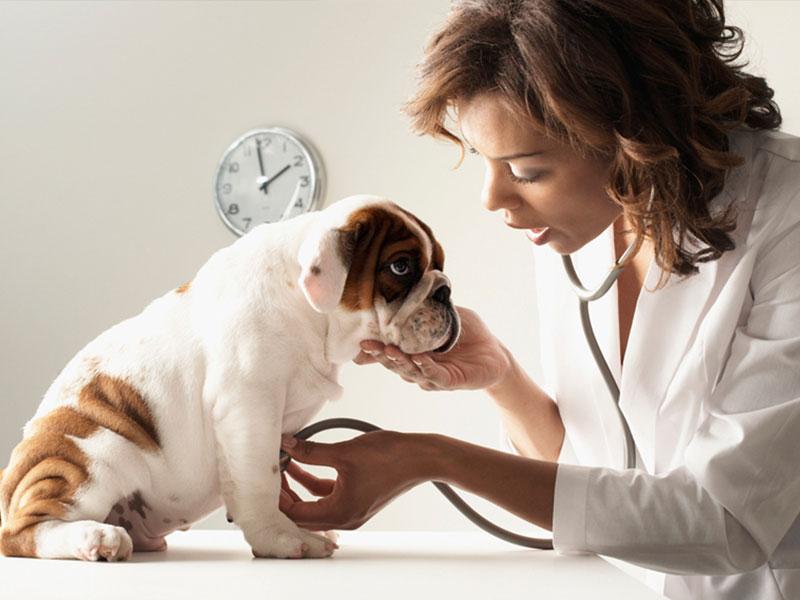 veterinario-gratis-se-adotti-dal-canile
