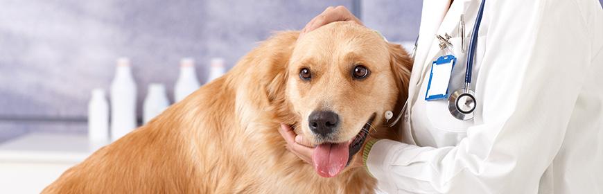 veterinario-gratis-se-adotti-un-cane