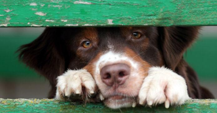 Vista dei cani Vi siete mai chiesti come vedono i nostri cani