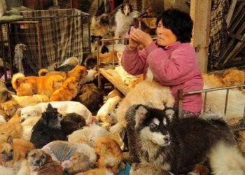 Yang Xiao Yun, la donna che percorre 2500 Km per salvare cani e gatti