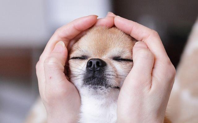 accarezzare-un-cane