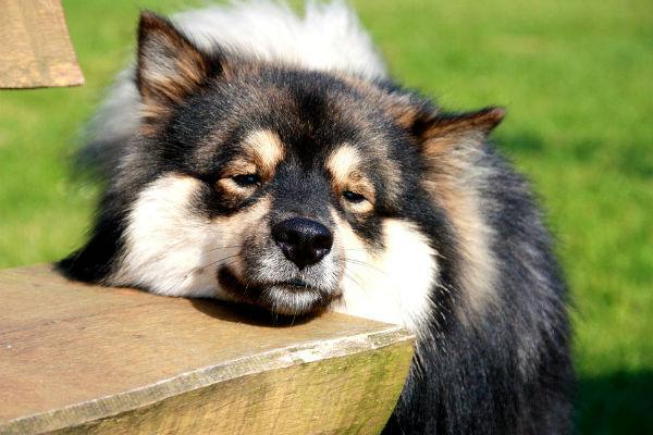 Ai cani piace stare al sole?