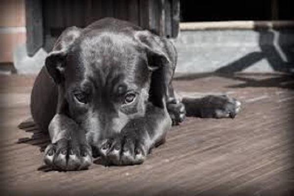 Ansia da separazione nei cani: come riconoscerla