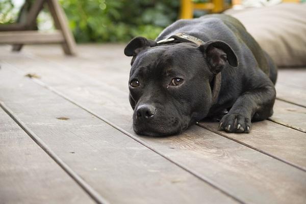 Ansia da separazione nei cani