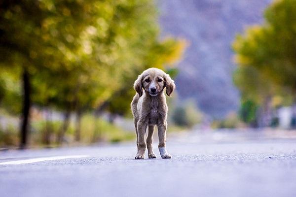 Avvelenamento del cane: segnali e cosa fare