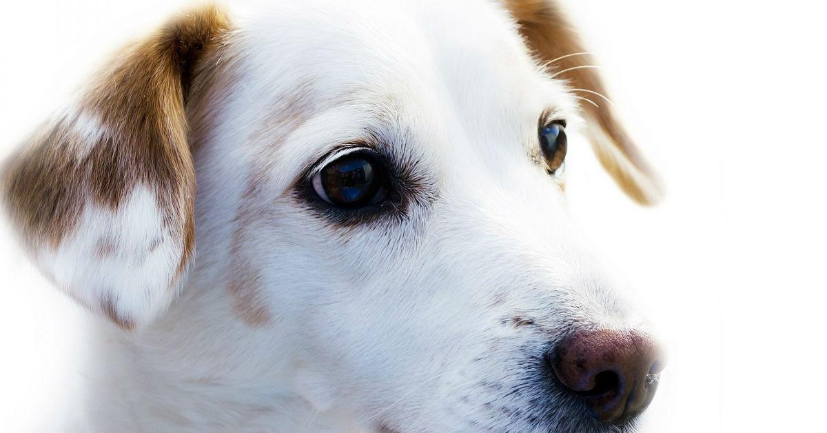 cane che non mangia