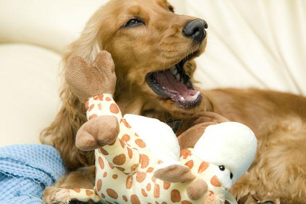 cane dorme con giocattolo