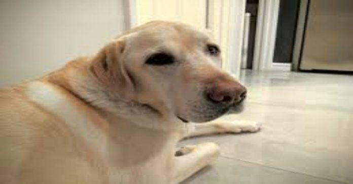 cane-che-vomita-giallo