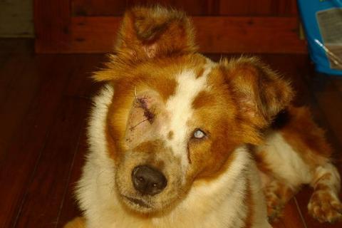 Cane cieco: come prendersene cura