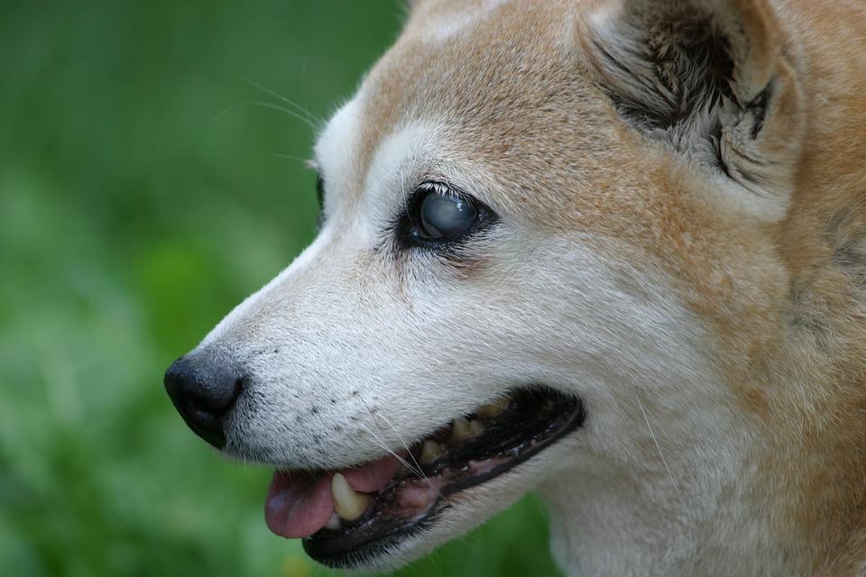 cane-cieco