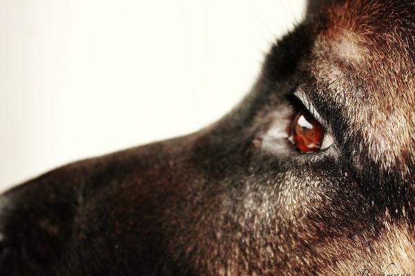 Cane depresso: le cause più comuni