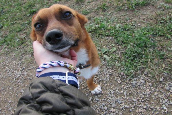 Il cane dice ti voglio bene? Sì, ecco 9 modi in cui lo fa
