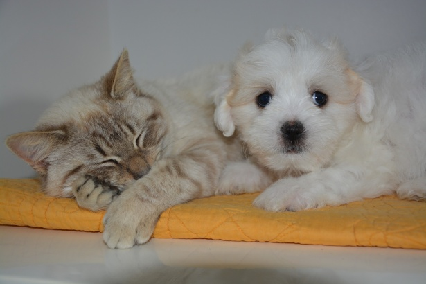 Cane e gatto: amici o nemici?
