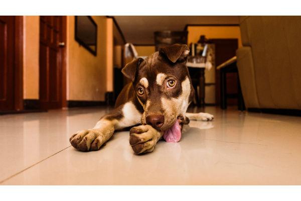 cane fa la pipì