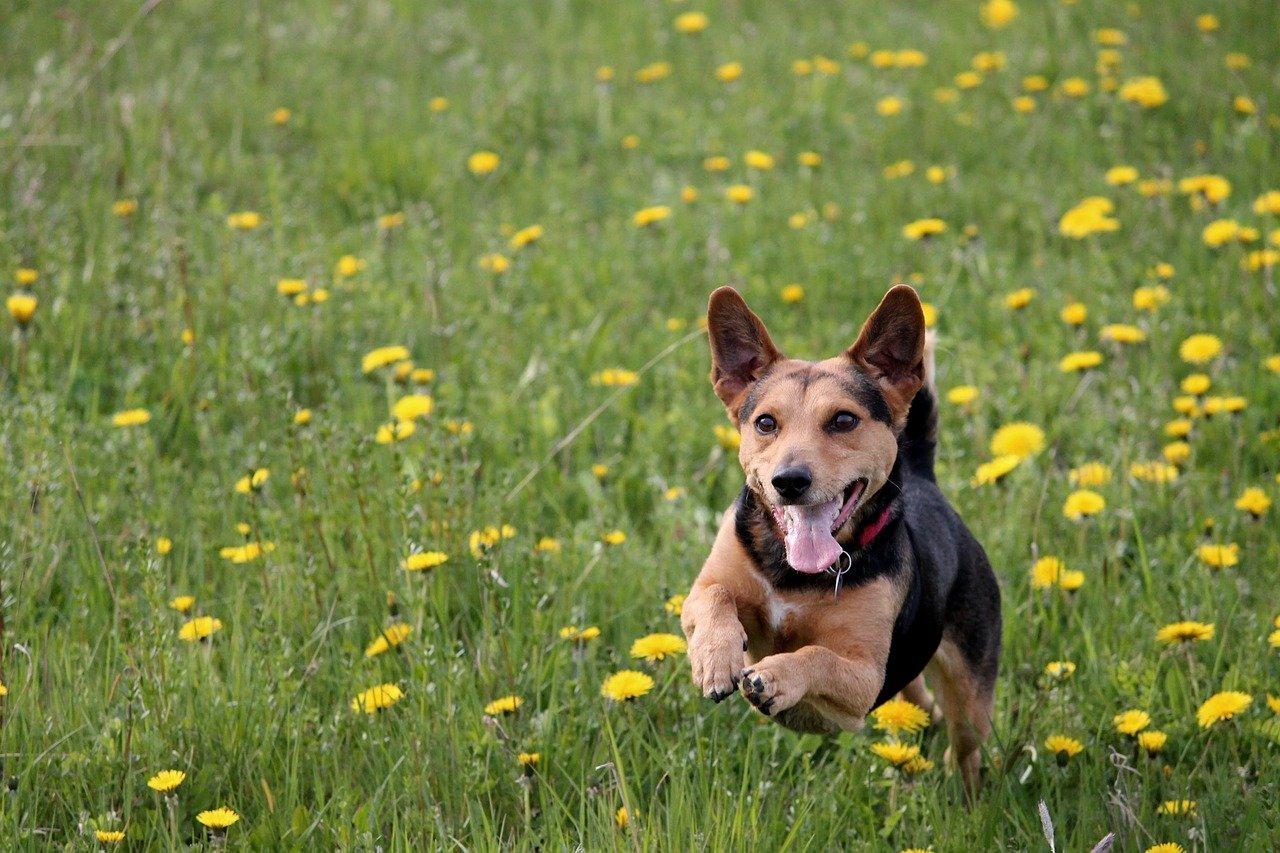 cagnolino corre nell'erba