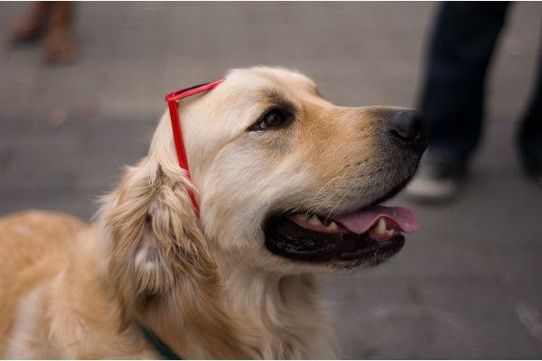 Caneterapia: benefici e privilegi di vivere con un cane
