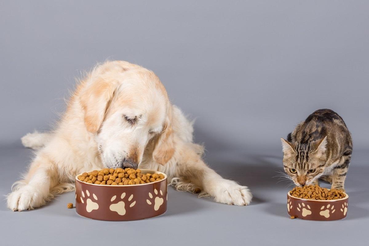 cane e gatto mangiano crocchette