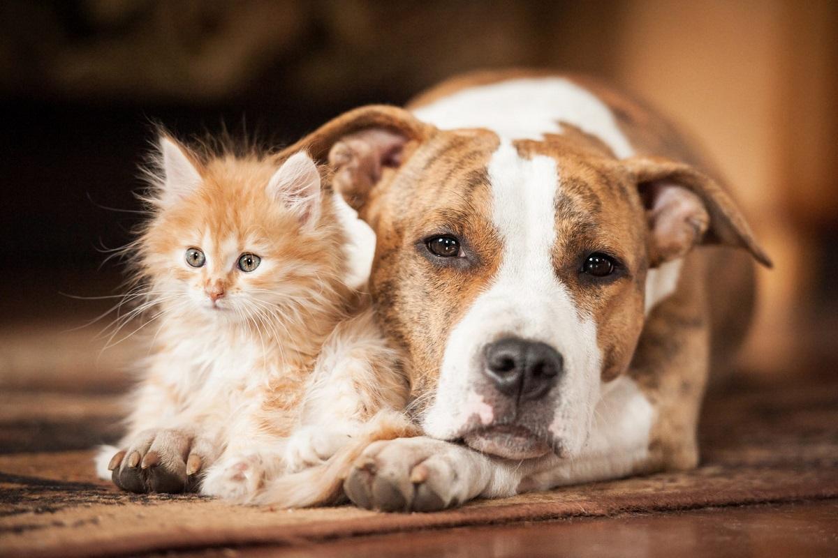 cane adulto e gattino