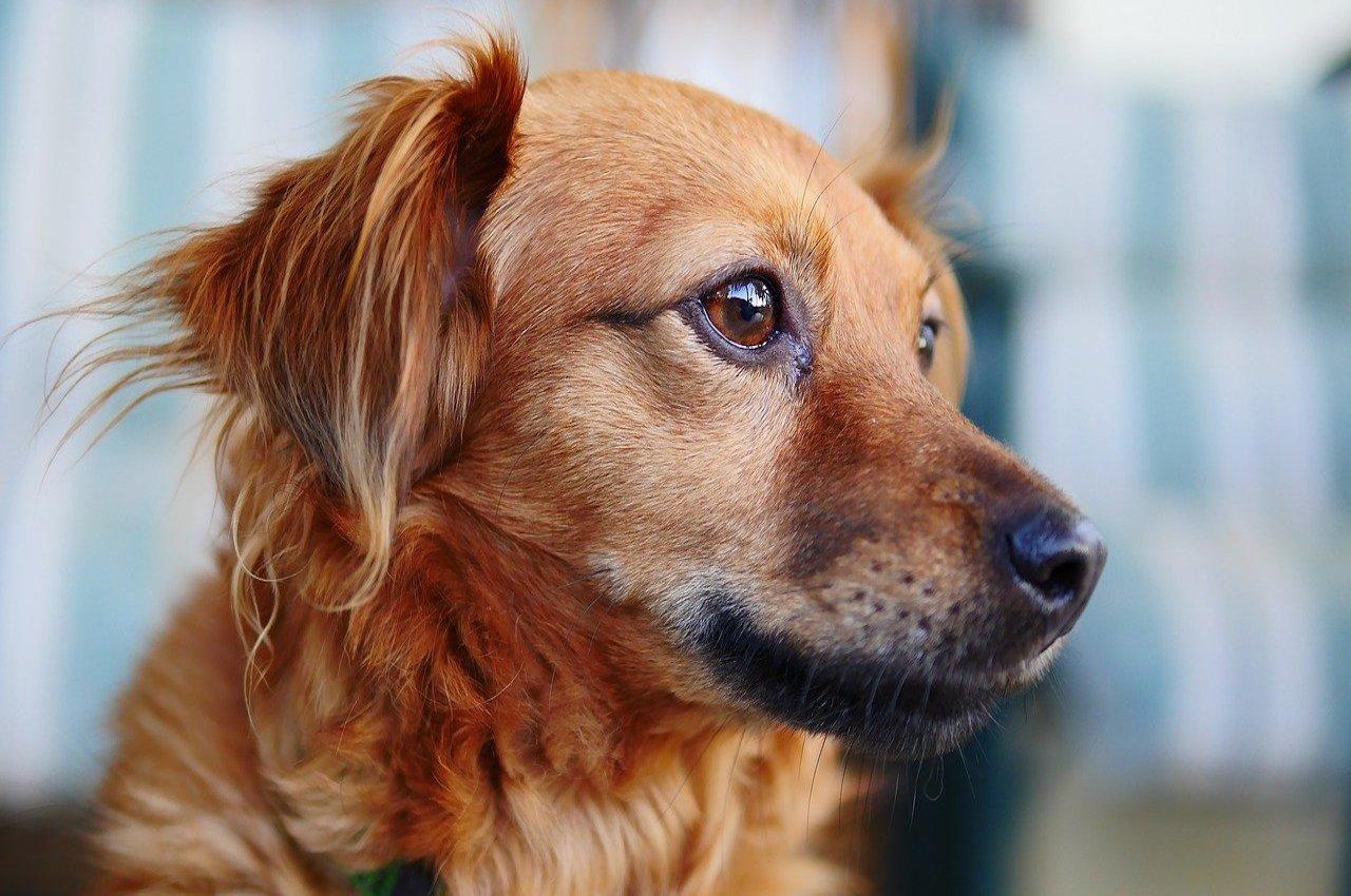 cane osserva qualcosa