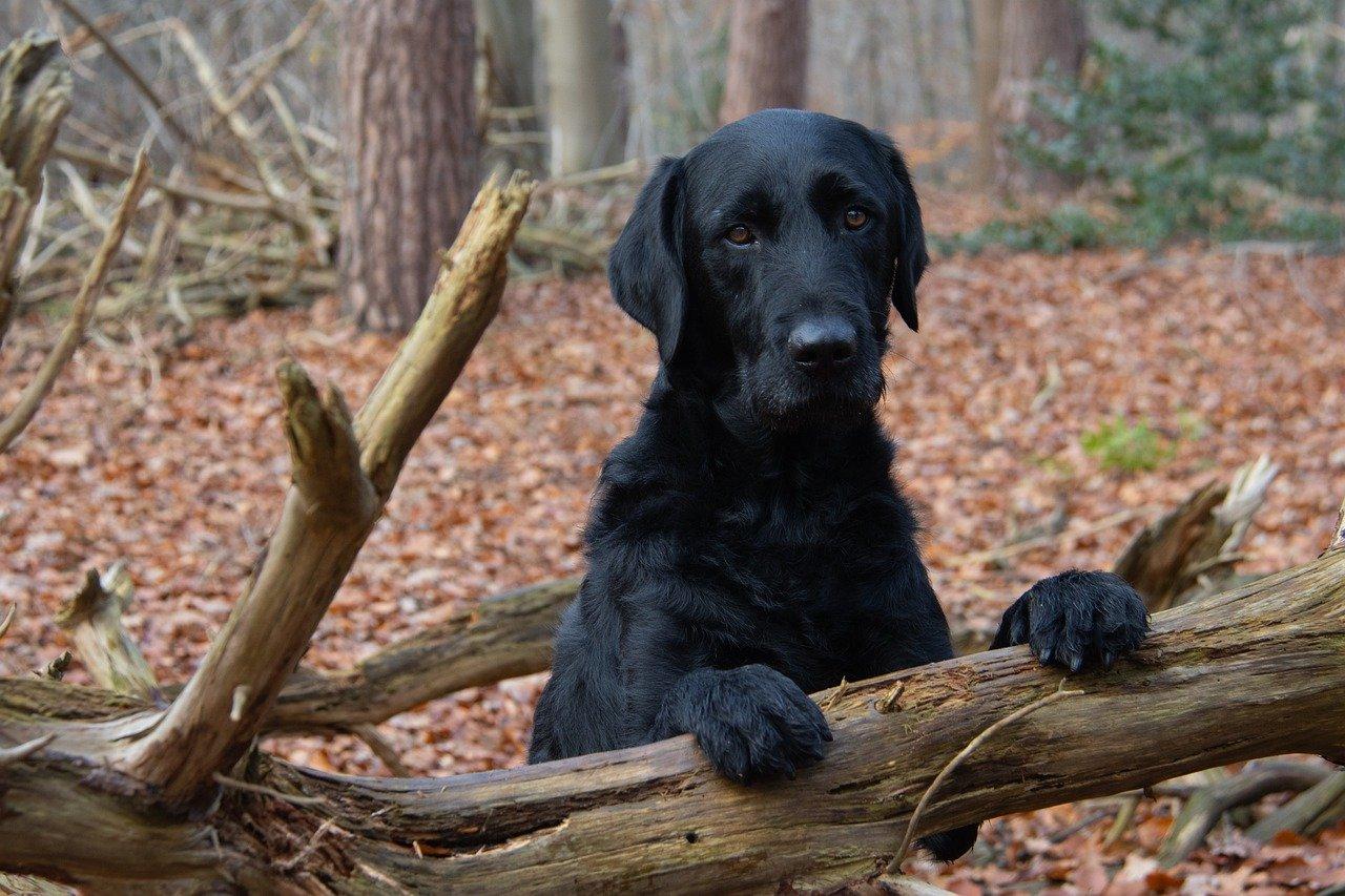 cagnolone nella foresta