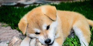 Cibi proibiti per il cane