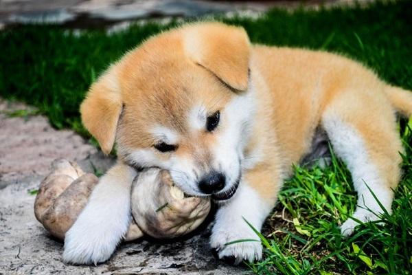Cibi proibiti per i cani