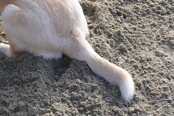 Perché il cane si lecca il sedere?