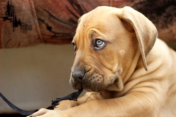 Come dare una pillola al cane