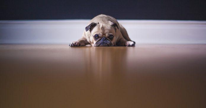 Come si comporta un cane triste