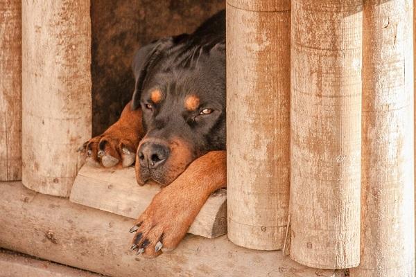 Come si comporta un cane triste, e perché diventa così?