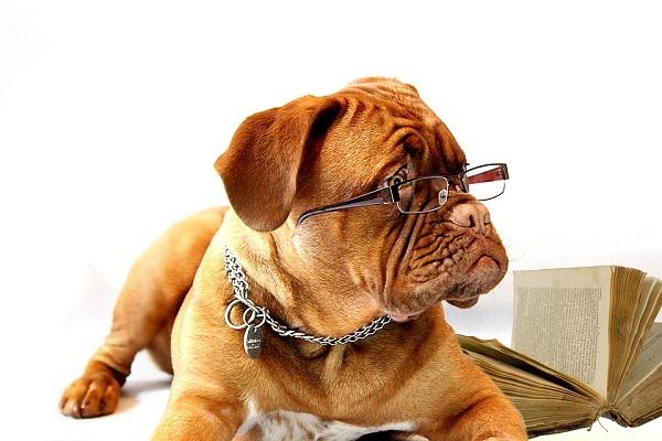 Come vedono i cani?