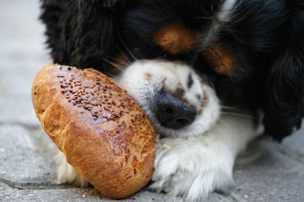 Cosa mangiano i cuccioli di cane?