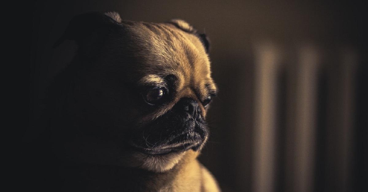 i cani cosa odiano